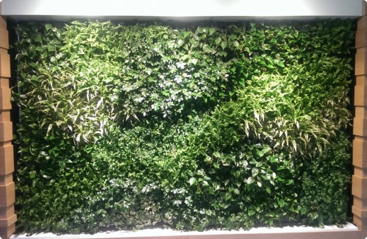 greenwall indoor (groene wand)